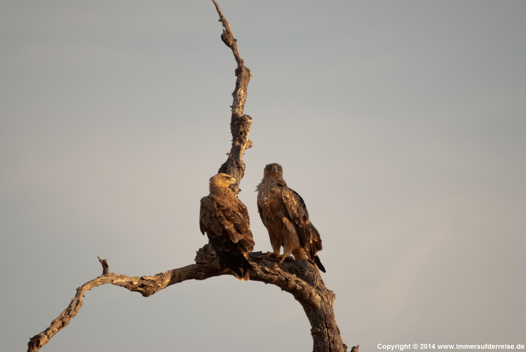 Tiere im südlichen Krüger Nationalpark