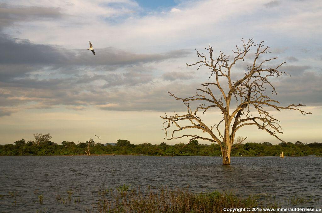 Udawalawa Feuchtgebiet