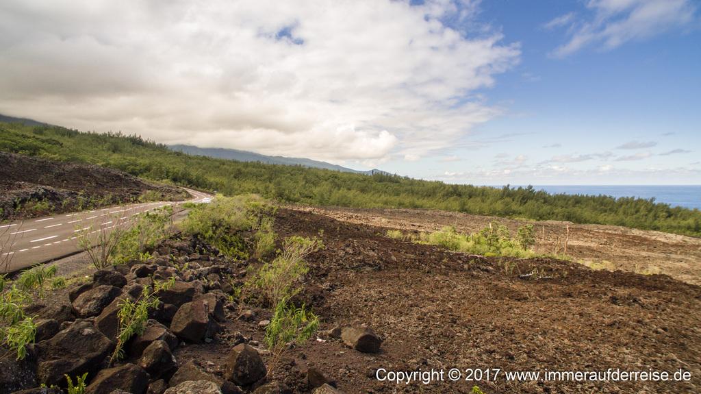 Lavafeld fließt durch Wald La Réunion - www.immeraufderreise.de