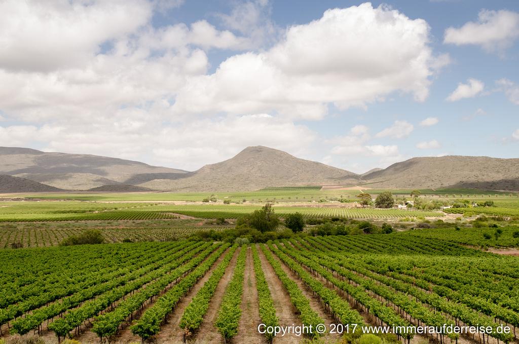 McGregor Wein bei Robertson Südafrika - www.immeraufderreise.de