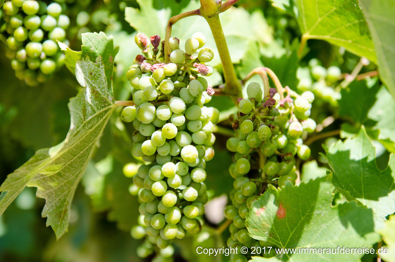 Durch die Weinanbaugebiete nach McGregor