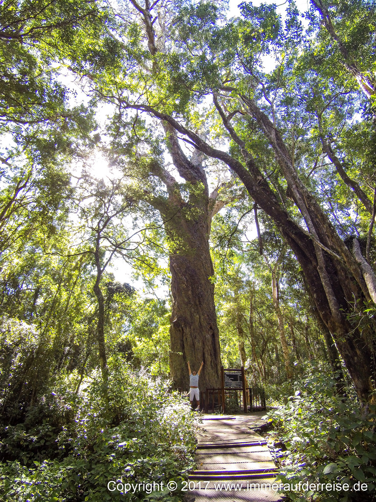 Wilderness Südafrika Yellowwood - www.immeraufderreise.de