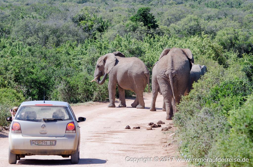 Straßensperre Elefanten Südafrika - www.immeraufderreise.de