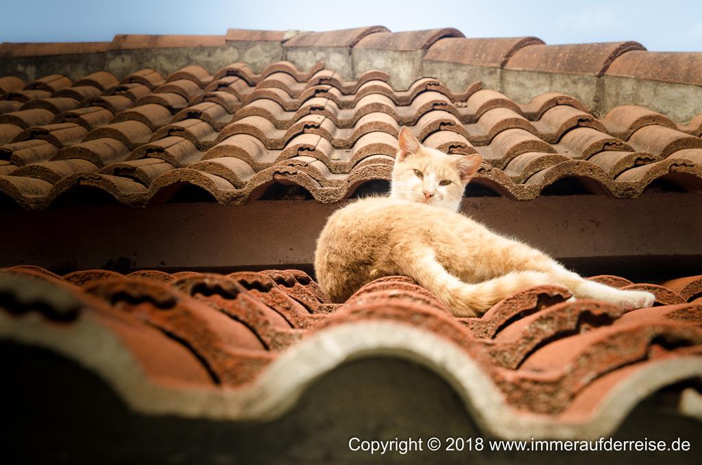 Katze sonnt sich auf Dach in Porto Moniz