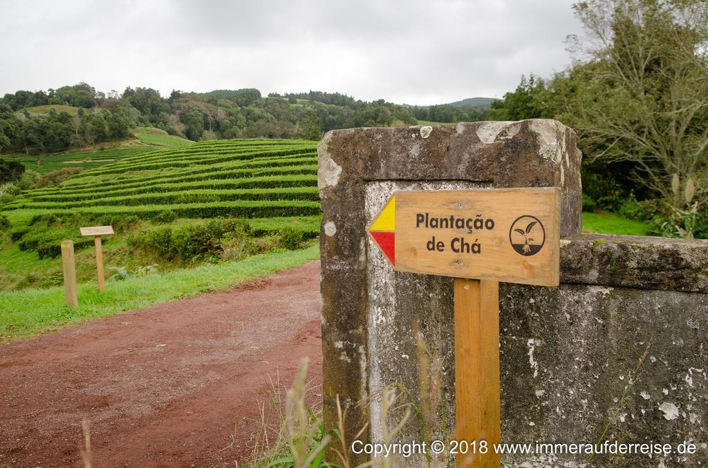 Wanderung Teeplantage Gorreana