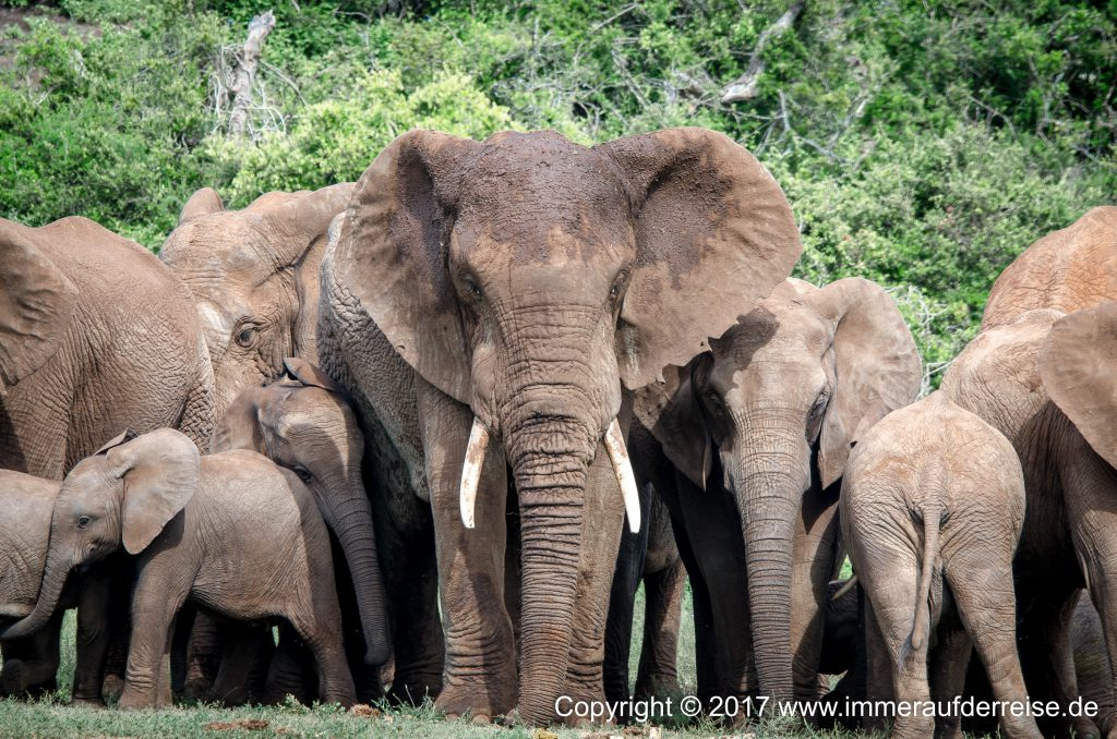 Addo Elephant Nationalpark - www.immeraufderreise.de